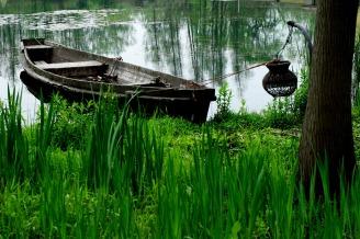 wetlands-1551833_1920