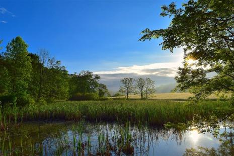 wetlands-2349354_1920